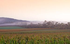 Header - Farm Field